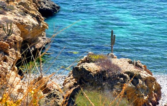 Coastal_cacti