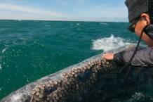 barnacle-whale