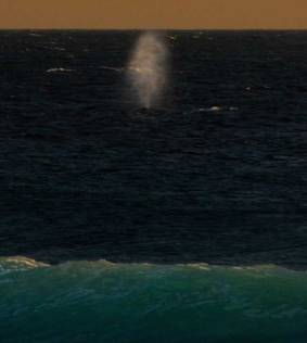 whale spouting off the beach