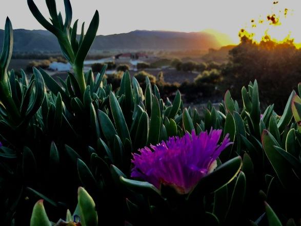 Desert_flowers2
