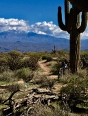 saguaro bike