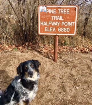 pine tree summit