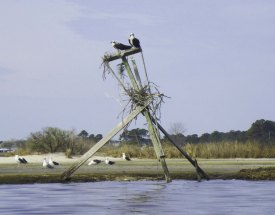 leaning osprey nest