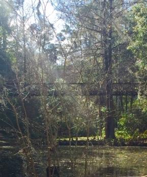 ravine gardens1